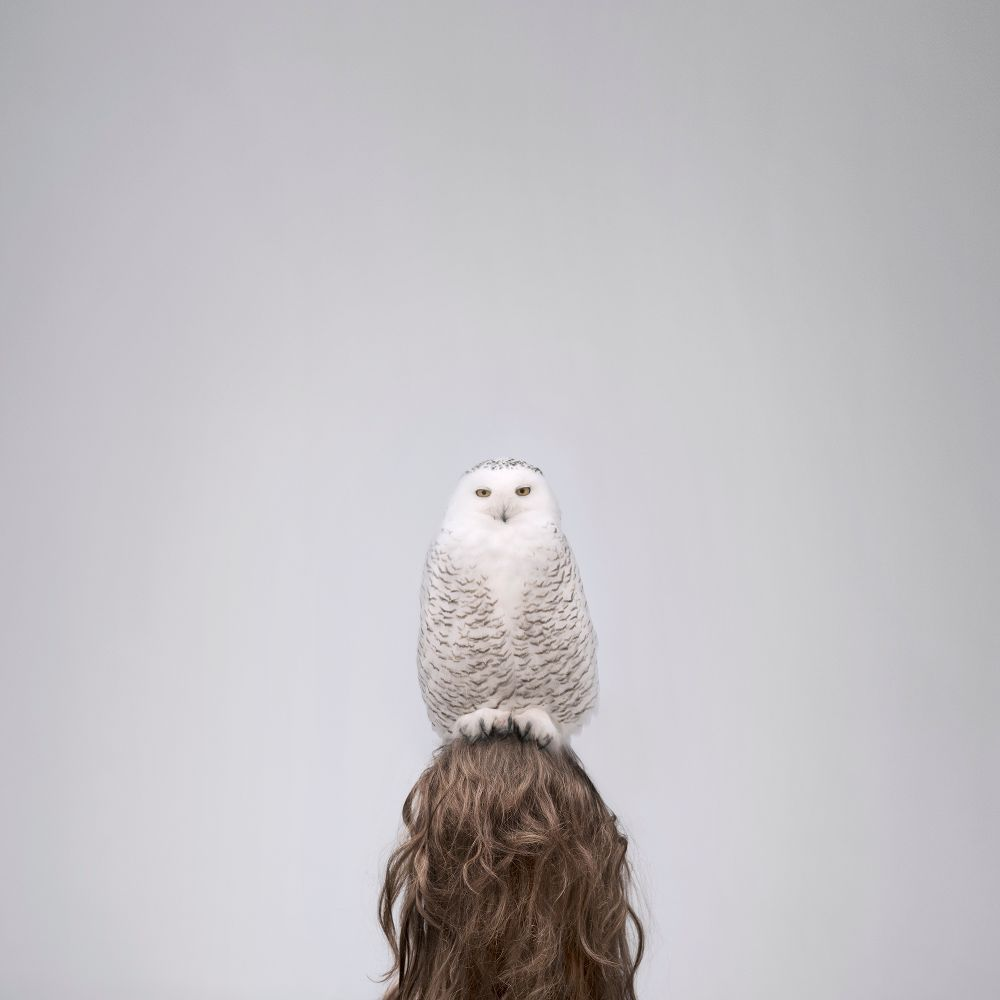 Необычные фотографии животных. Фотограф Philip Kanwischer