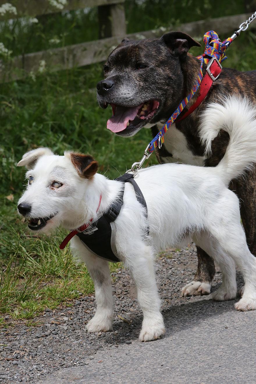 Такой дружбы вы еще не видели: Базз и слепой Гленн (5 фото)