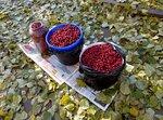 Карельские ягоды