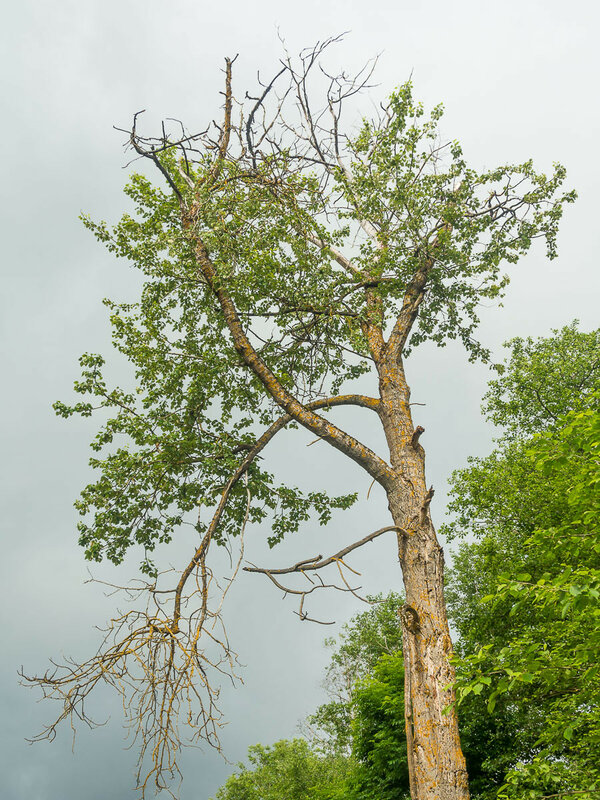 По сторонам много старых деревьев.