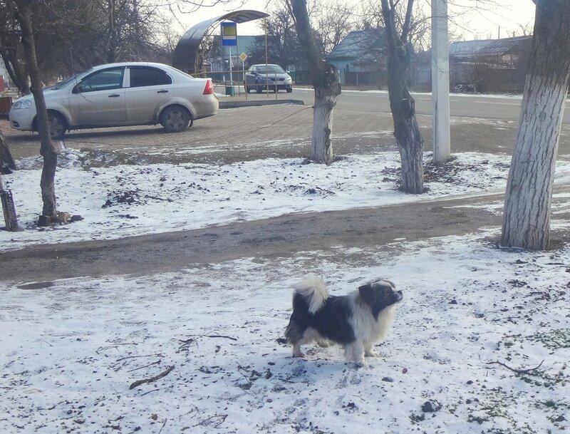 Собака в январе, год 2018 (2).JPG