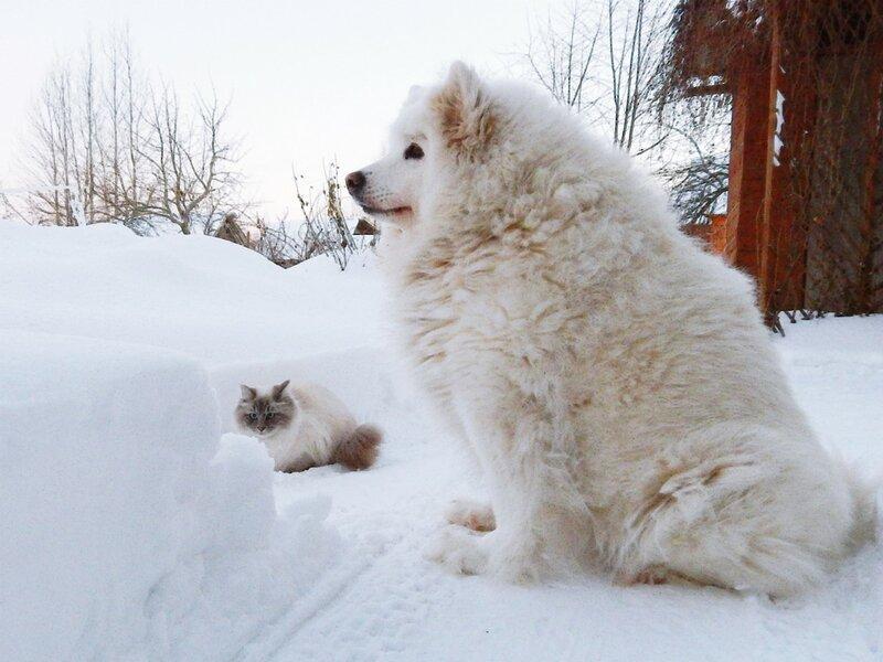В глубоких снегах января