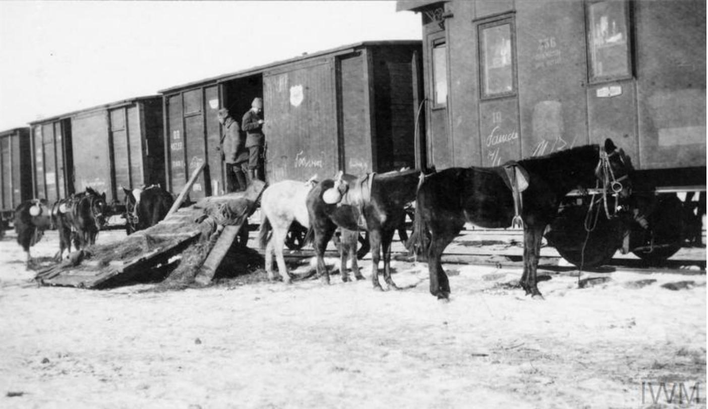 Лошади генерала Павлова, командующего IV Донским кавалерийским корпусом за пределы железнодорожных вагонов. Станица Мечётинская, январь 1920