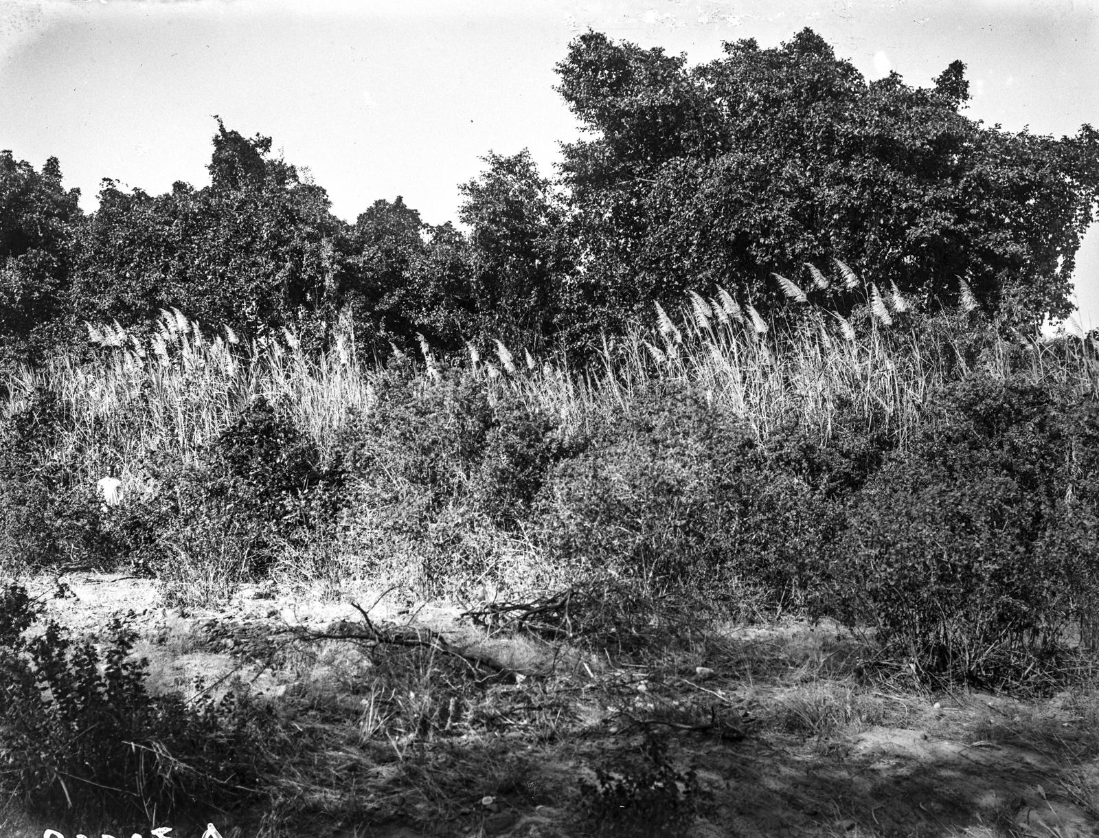 48. Высокие травы возле леса