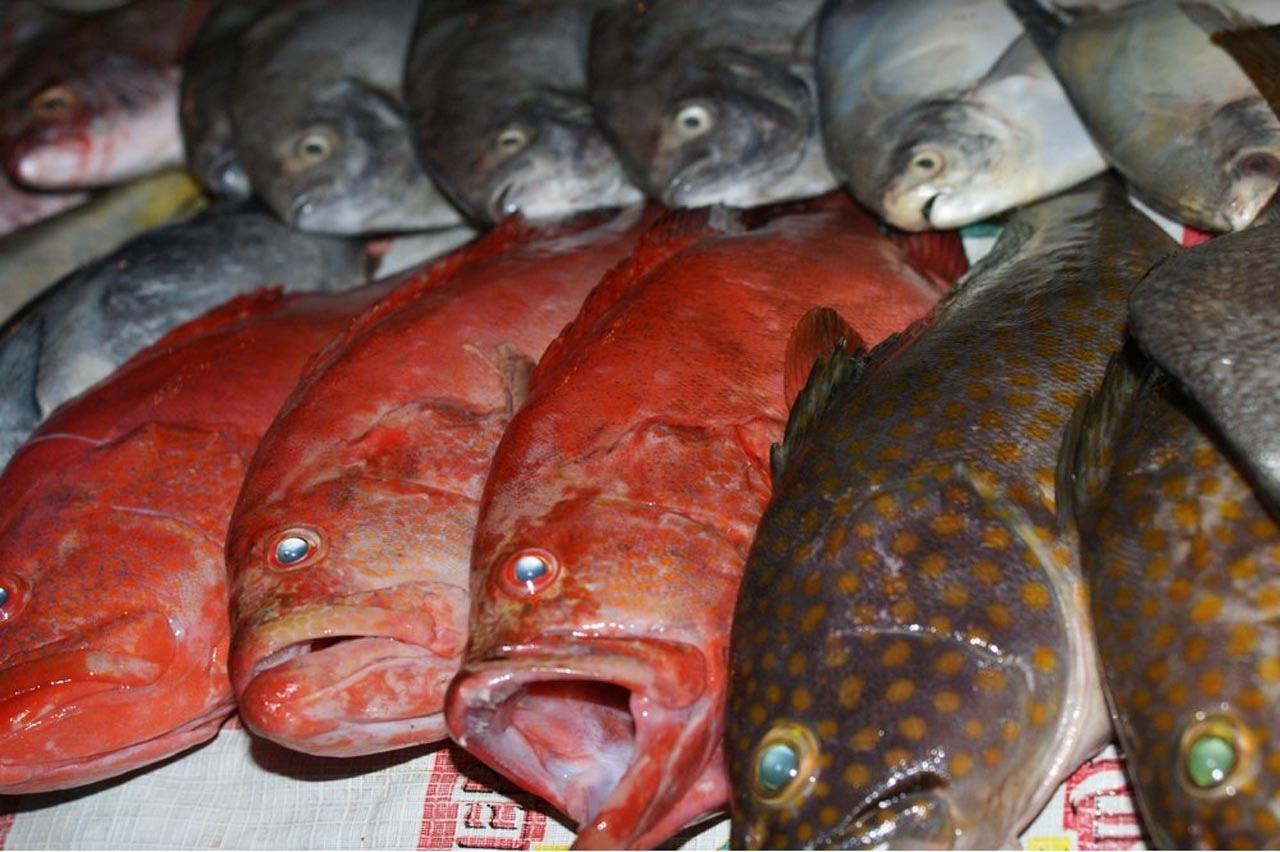 Рыбы, где-то в Индии, в 21-ом веке