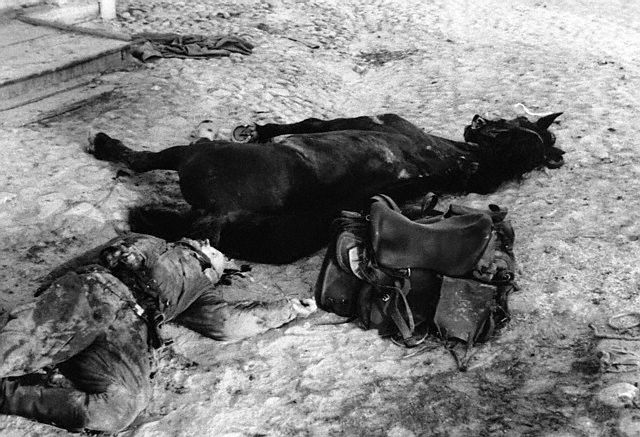 Dead Cossack Soldier With Dead Horse