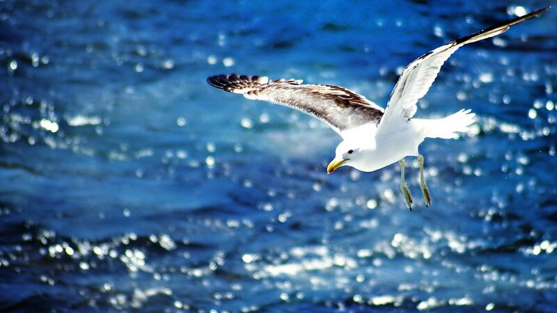 seagulls-34736.jpg!d