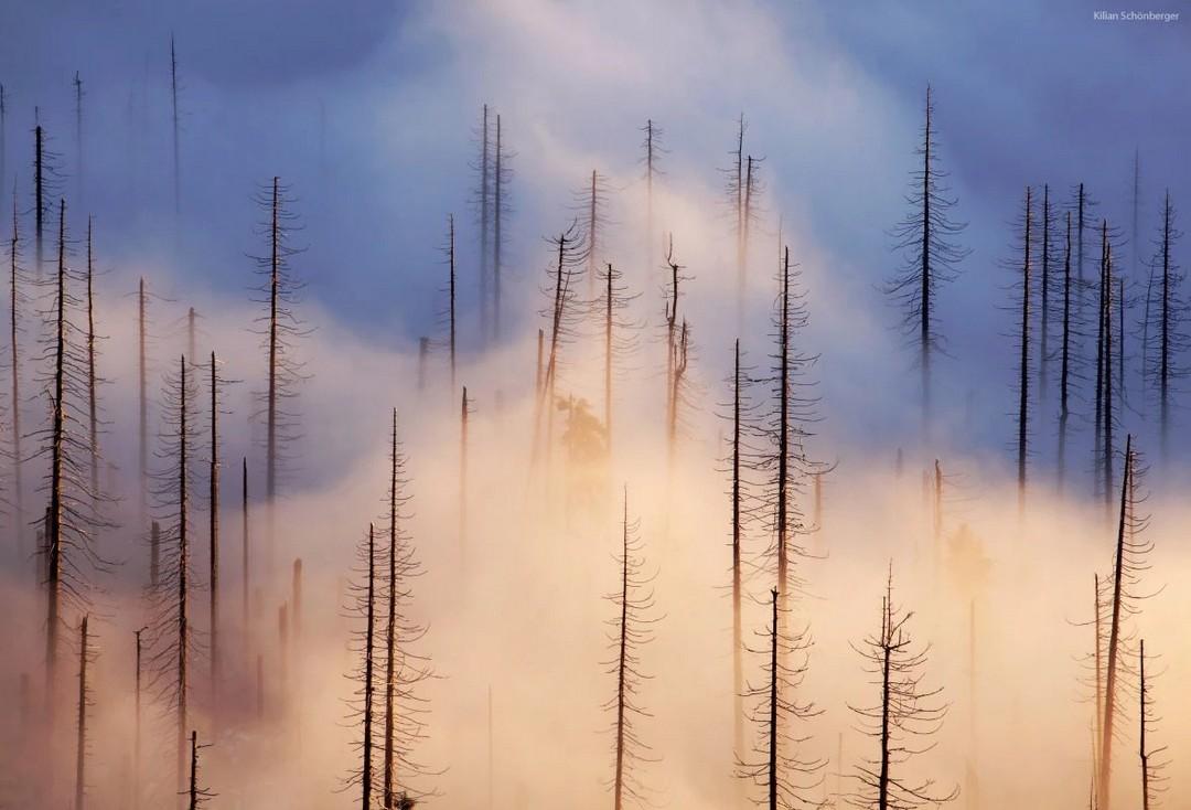 Замечательные снимки фотографа с дальтонизмом Килиана Шонбергера