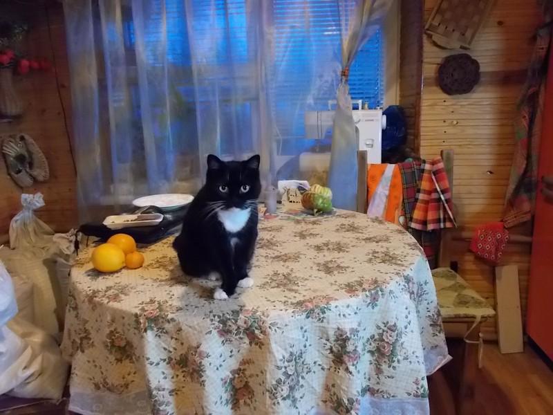 Первый день деревенской зимы время, очень, пеной, кресло, Далее, домик, птичью, темноте, завтрак, чтобы, чашка, звериным, делом, соусом, сделать, новая, томатным, ватрушку, Решила, Выдаю