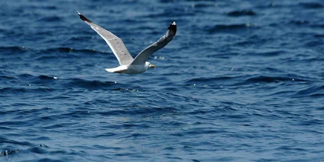 День Черного моря. Чайка