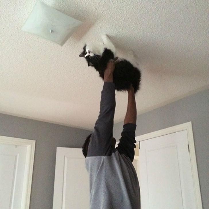 Один вопрос: кошка сама туда забралась или ей помогли?