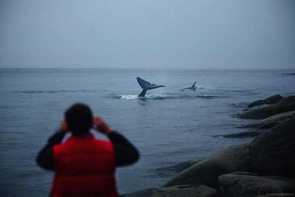 11. Но вроде все обошлось и все киты остались живы, хотя местами вода окрасилась красным... Долгое в