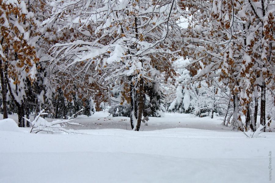 winter7.JPG