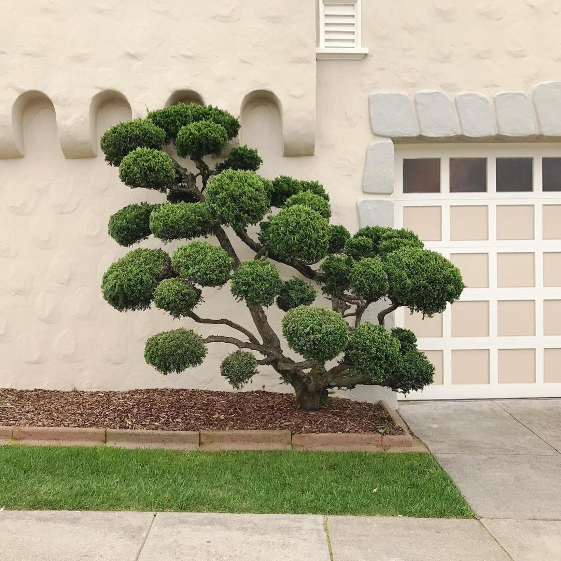 Surreal Trees - She documents the strange trees of San Francisco