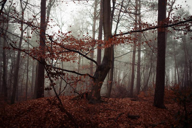 http://heinerluepke.com http://flickr.com/people/doktore_mabuse