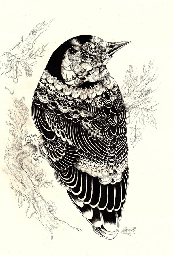 Illustrator – Iain Macarthur (20 pics)