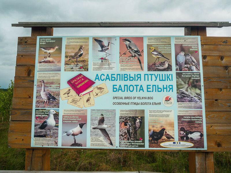 Здесь водится много птиц.