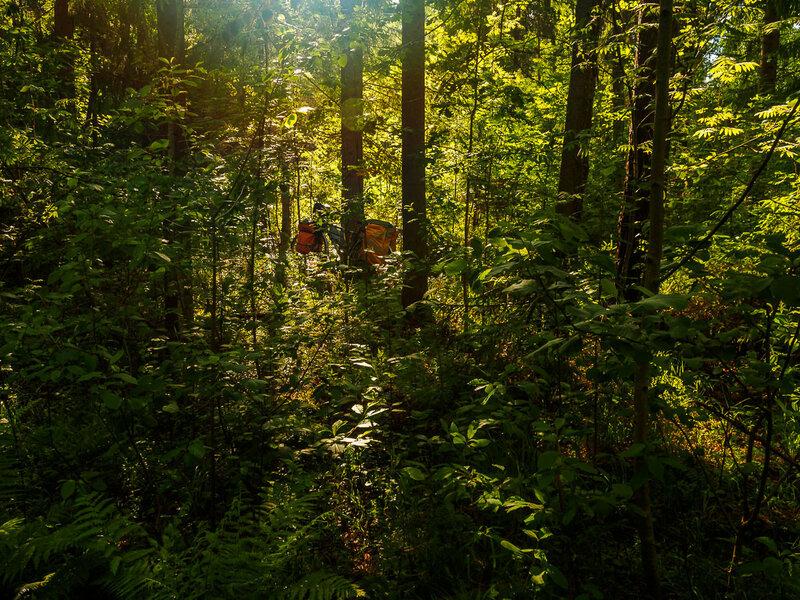 Затерялся в джунглях.