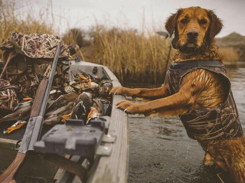 Особенности охоты с собакой