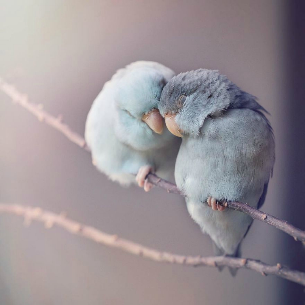 A-Storybook-Love-Between-Pastel-Parrotlets-5a83f868ae375__880.jpg