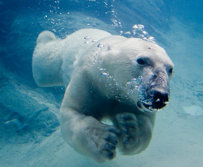 Праздник 27 февраля – Международный день полярного медведя открытки фото рисунки картинки поздравления