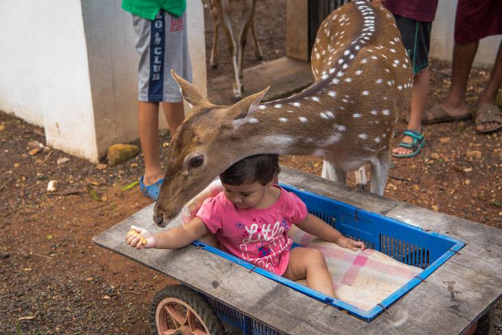 Леопард-подросток очень игрив. (Фото Haziq Qadri):