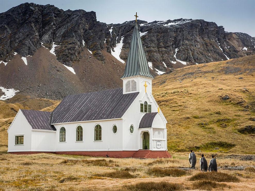 Троица королевских пингвинов приближается к церкви, остров Южная Георгия. Фото: Carl Henry