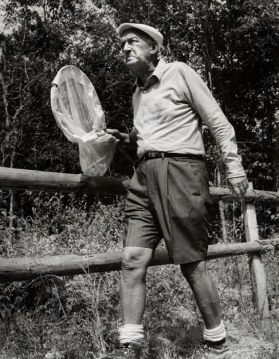 Владимир Набоков охотится на бабочек. Швейцария, 1972 год.   Известные поэты, композитор