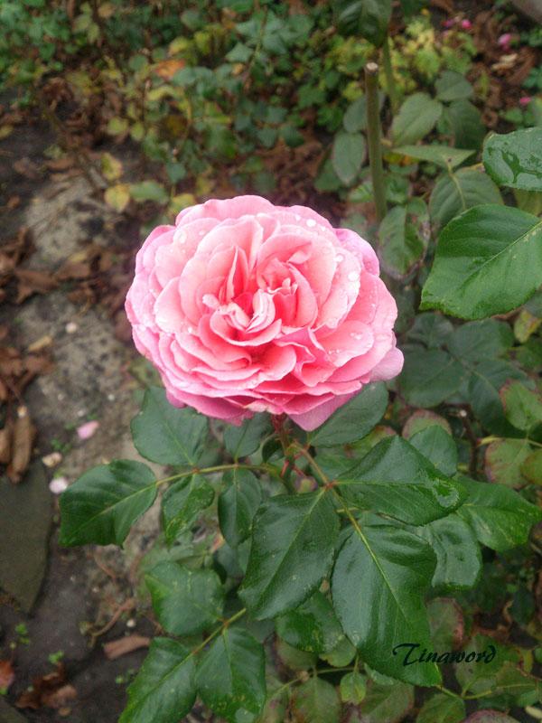 цветы-осени-7.jpg