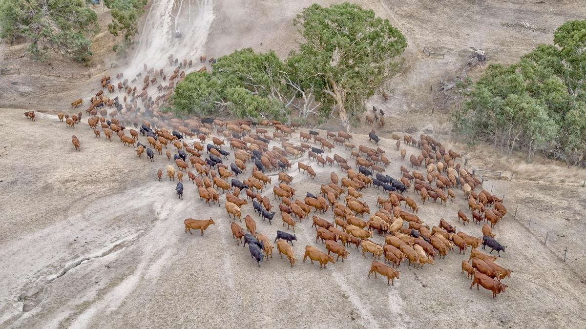 Большие сельские хозяйства в Австралии