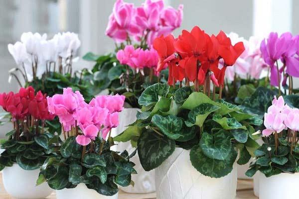 растения цветут зимой
