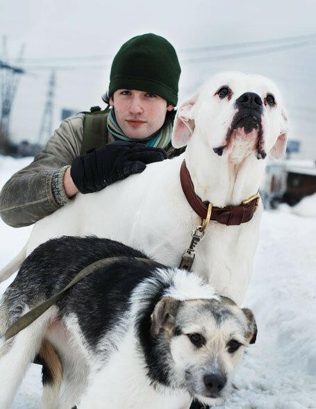 зимние собаки 270.jpg