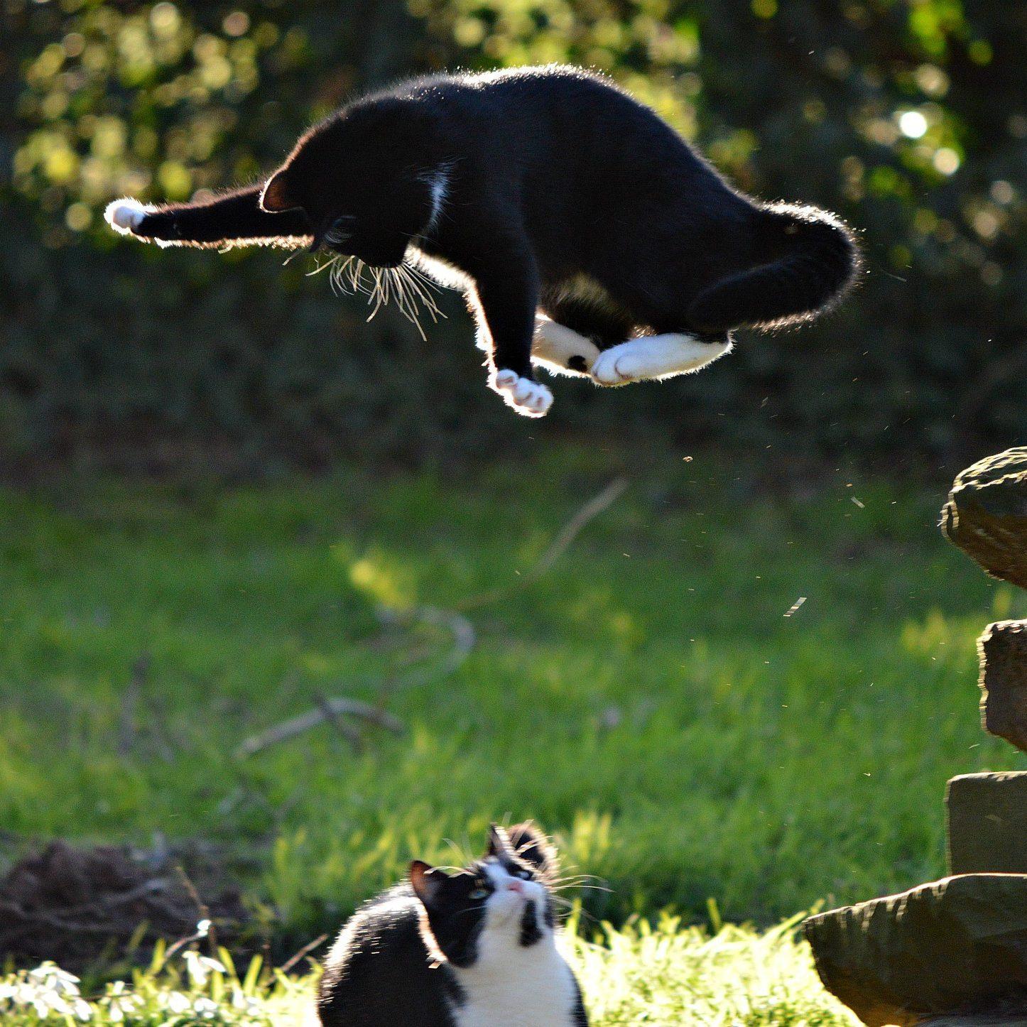 Кошачий рестлинг. Хитер Росс, Великобритания.