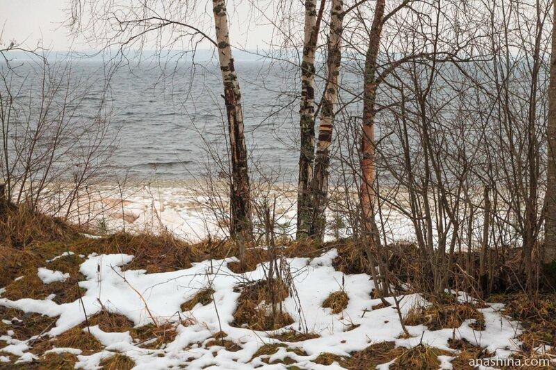 Берег Онего, Вологодская область