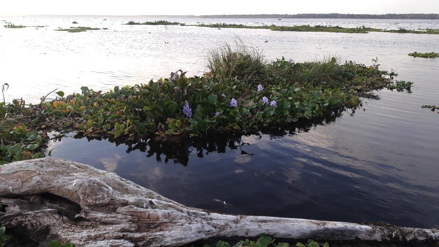 Водохранилище во Флориде
