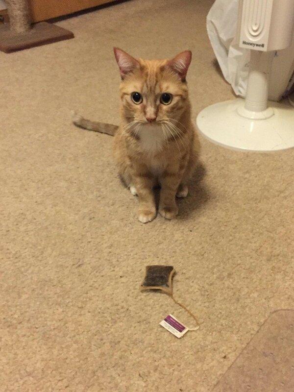 Обычно кошки приносят хозяину мышей или птичек...
