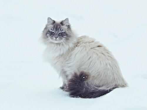 Сегодня день кошек !