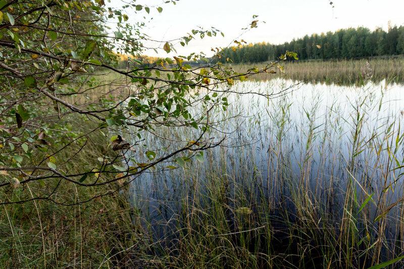 берег озера Sainatjarvi