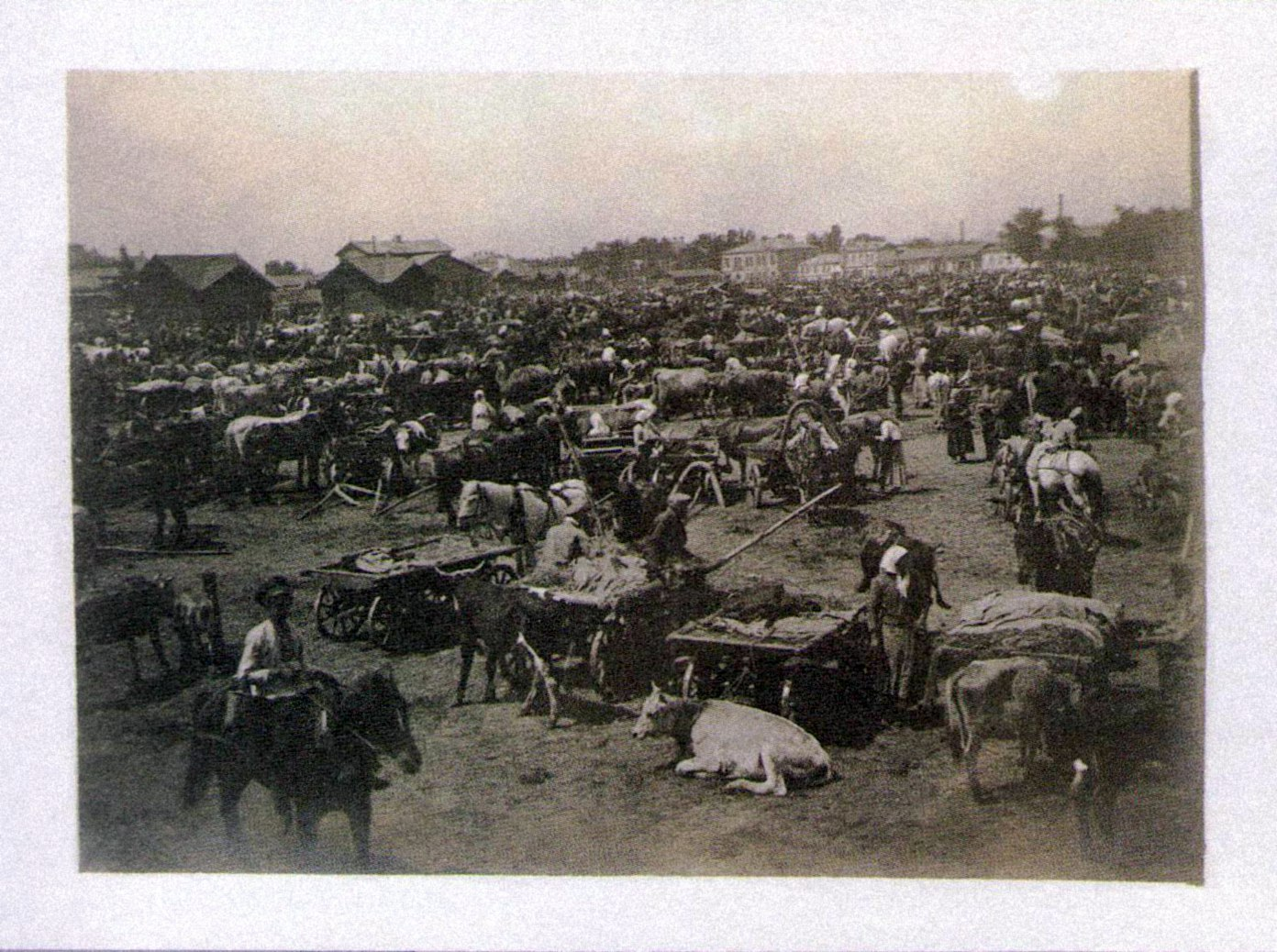 Торговля скотом на Конном рынке