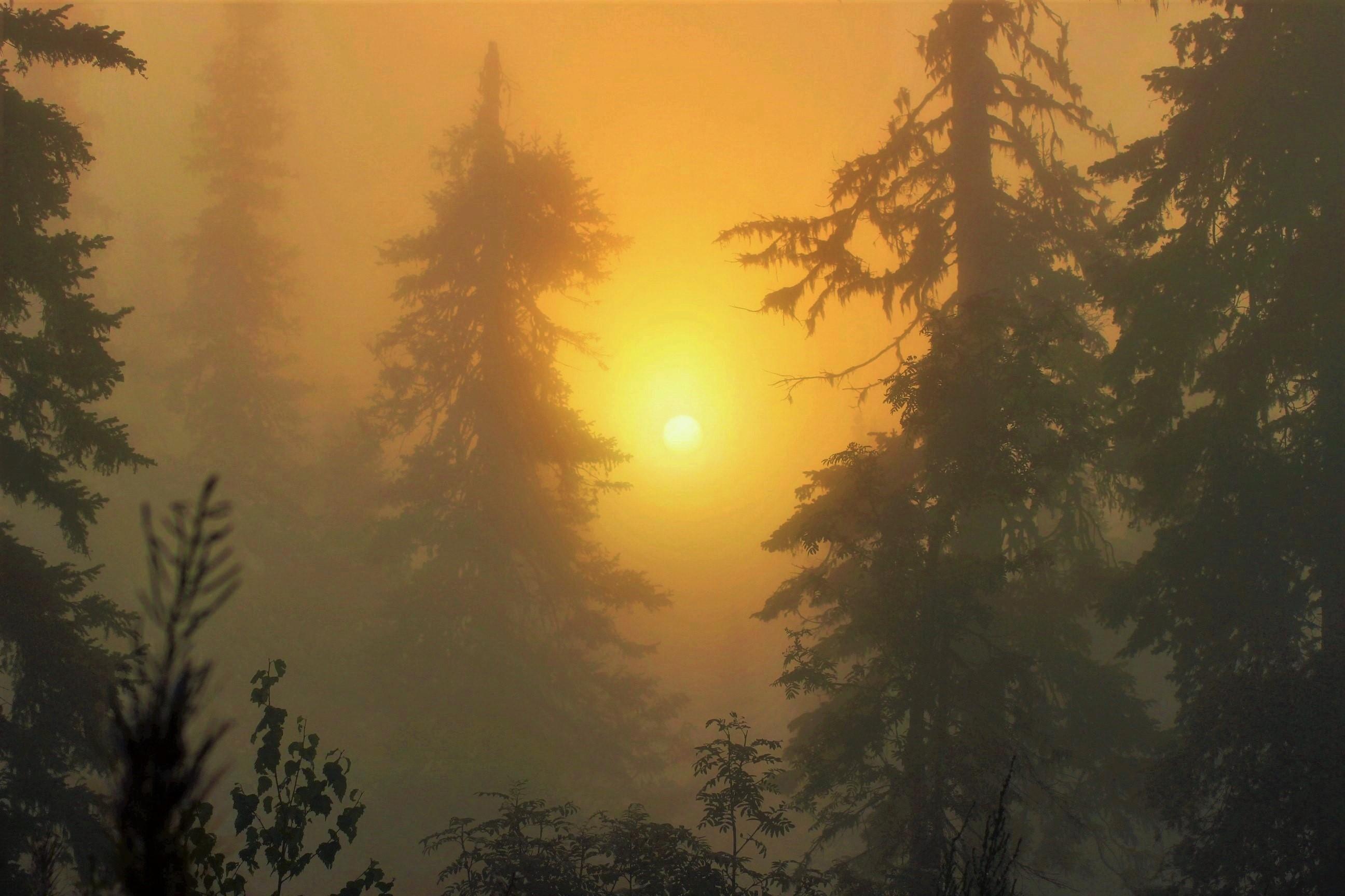 IMG_7920.JPG В туманных дебрях восходит солнце