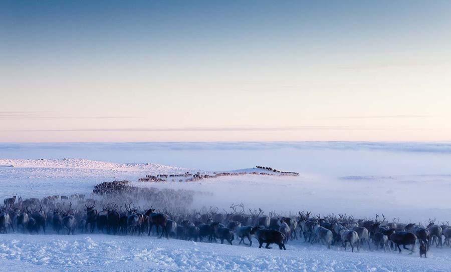 26. Миграция северных оленей — Полярный круг, Норвегия Раз в год вот уже на протяжении более 4000 ле