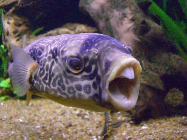 Нефотогеничные животные, которые обязательно поднимут Вам настроение