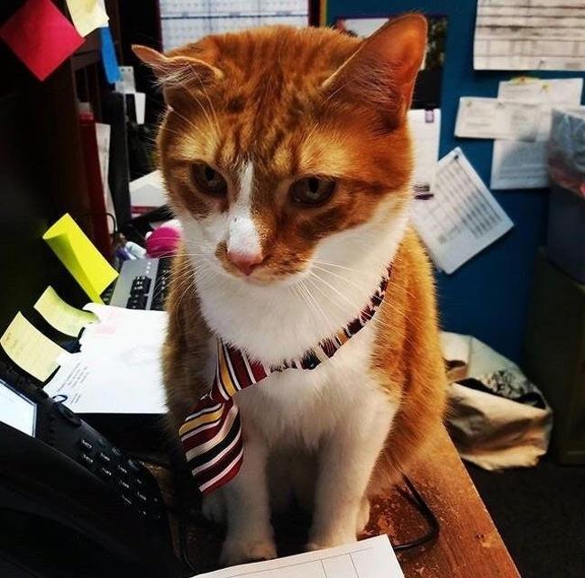 Дом Мила животные день один день коты радио полезно настоящее