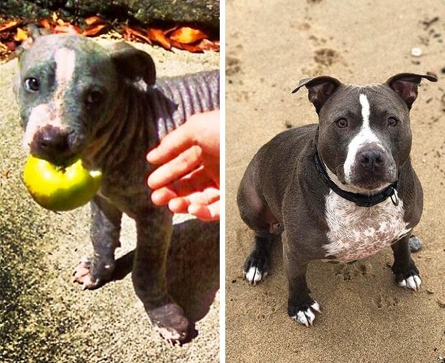 защита животных люди собаки животные девочки организация штаты бездомные