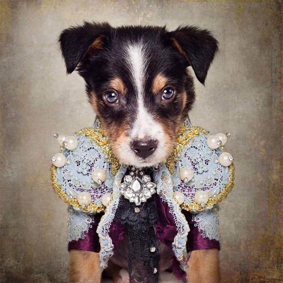 Нарядные собачки ищут хозяев: фотограф из Арканзаса Тэмми Суарек (Tammy Swarek)