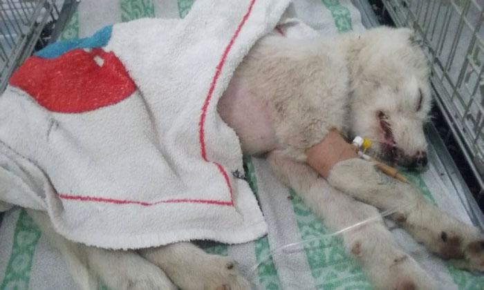История спасения избитой и выброшенной со строительным мусором собаки