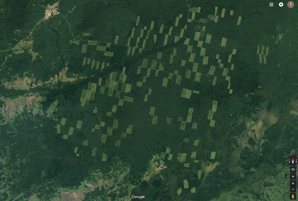 Как в Томской области вырубают лес