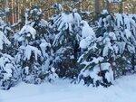 Прикрыты снежным одеялом...