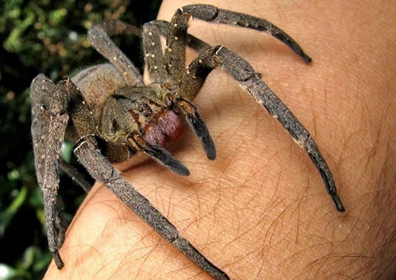 Смертельно опасные существа, которые используются в терапевтических целях