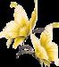 Жёлтые бабочки.png